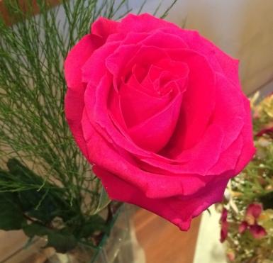 09. Rosa