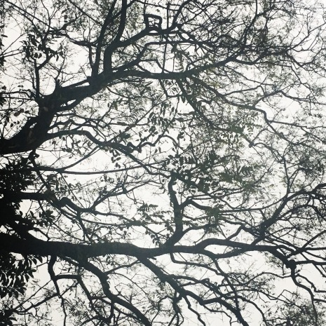 Árvores (48)