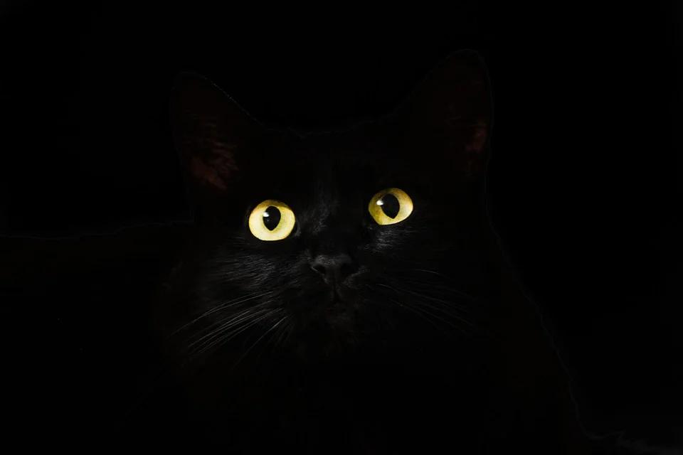 Olhos amarelos de um gato preto.